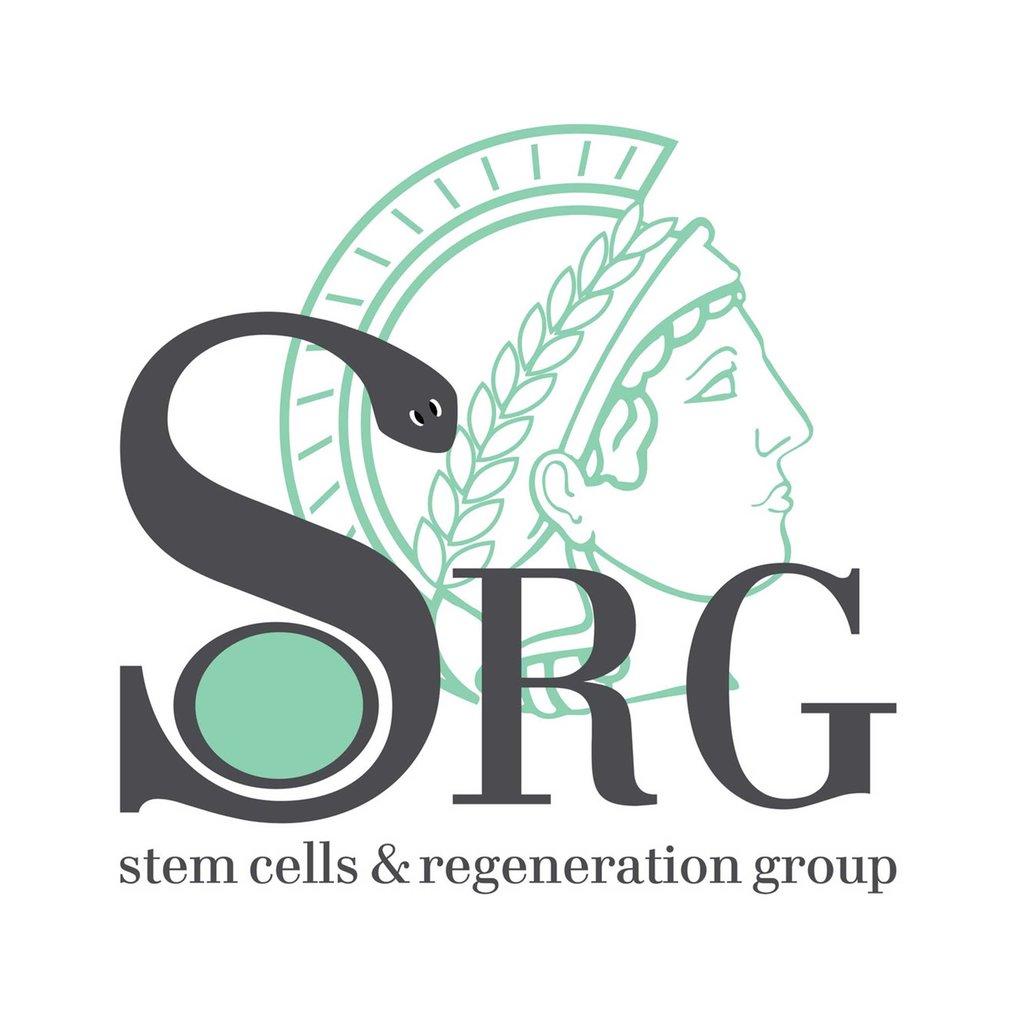 Stem Cells and Regeneration (Bartscherer) | Max Planck