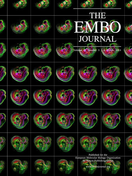 EMBO Journal cover image from March 6, 2013